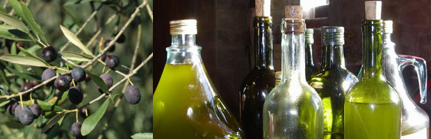 Olive Oil: Looks Green, Smells Green, Tastes Green