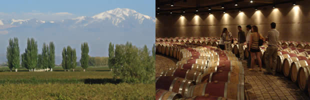 From the Andes to the Cellar: Argentinean Wines