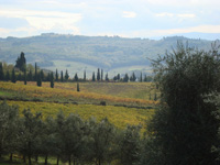 Vineyards at San Casciano